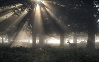 Aufstellung im Unterholz: Wer hat das Zeug zum Nachfolger?